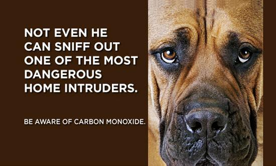 carbon-monoxide-dog